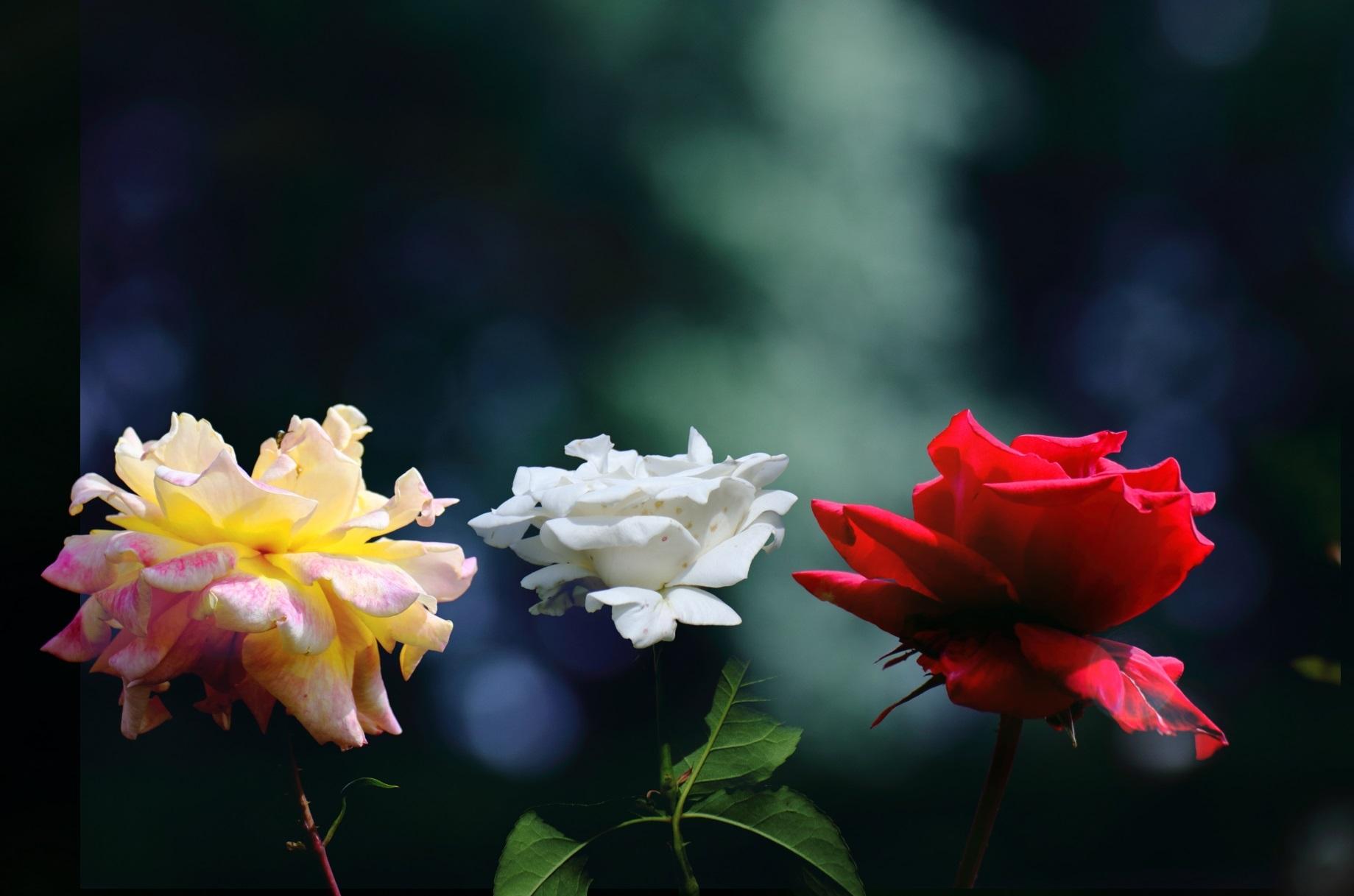 世界の国花と花言葉_美しい